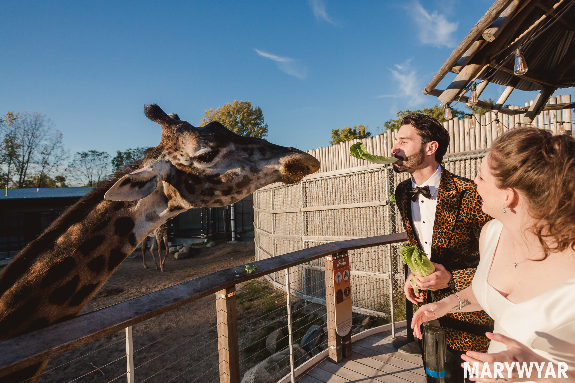 Toledo zoo wedding photos giraffes