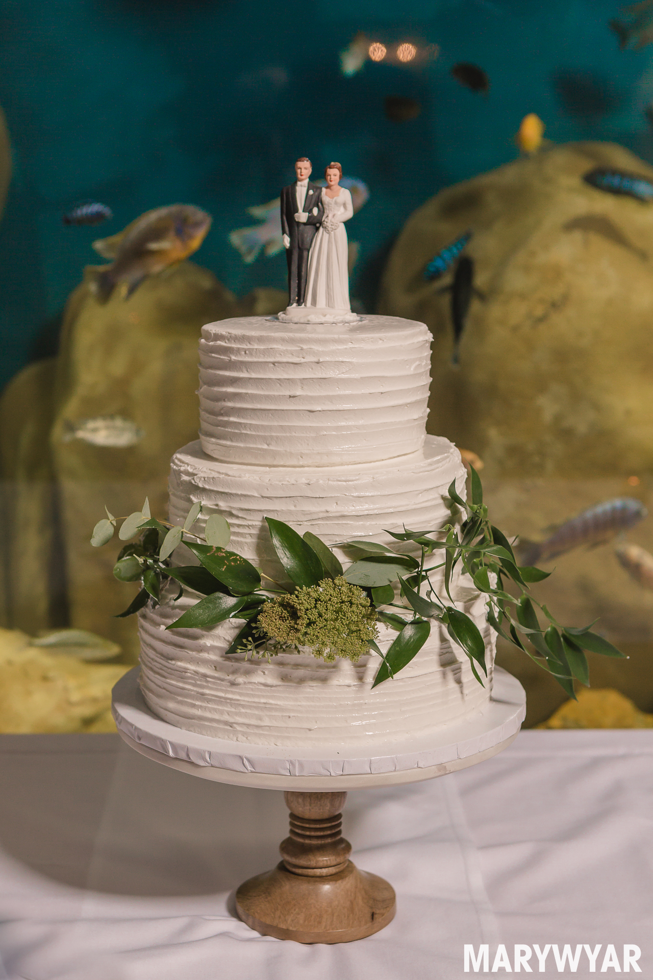 wedding cakes toledo toledo zoo wedding cakes 5000 simple wedding cakes 25721
